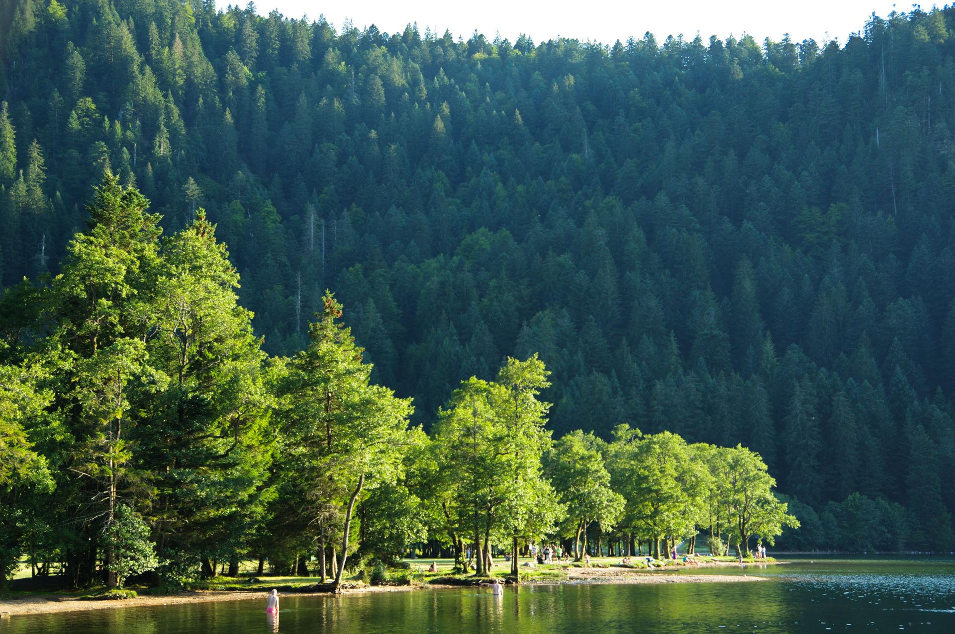 Frankrig 20.-22. august - Vosges bjergene